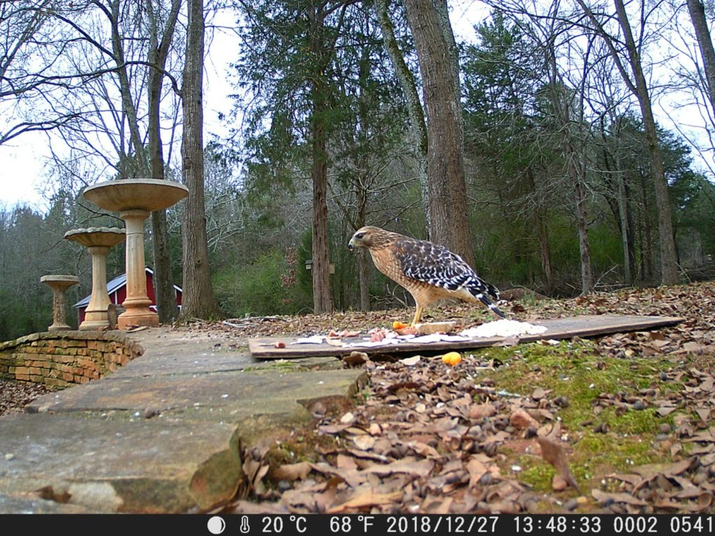 Photo 2 captured with TOGUARD Trail Camera DSLR
